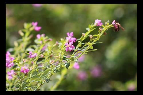 Bunga Kecil, hanya untuk Lebah  kecil
